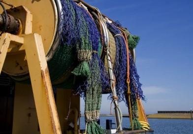 Jak a kde v Česku nakupovat čerstvé ryby? Veni, ryby, vici