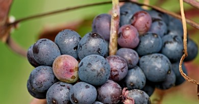 grapes-3102312_1280